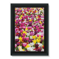 Different Tulips In Holland Framed Canvas 24X36 Wall Decor