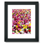 Different Tulips In Holland Framed Fine Art Print 12X16 / Black Wall Decor