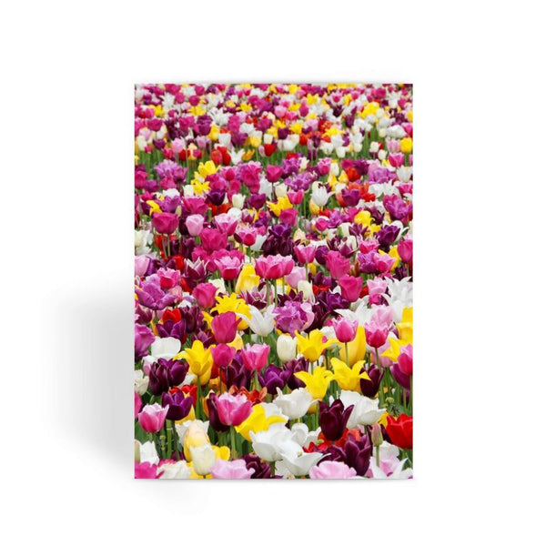 Different Tulips In Holland Greeting Card 1 Prints