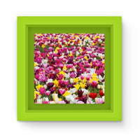 Different Tulips In Holland Magnet Frame Green Homeware