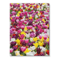 Different Tulips In Holland Stretched Canvas 12X16 Wall Decor