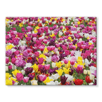 Different Tulips In Holland Stretched Canvas 16X12 Wall Decor