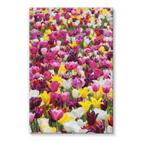 Different Tulips In Holland Stretched Canvas 20X30 Wall Decor