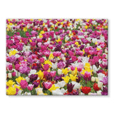 Different Tulips In Holland Stretched Canvas 32X24 Wall Decor