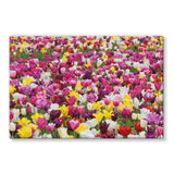 Different Tulips In Holland Stretched Canvas 36X24 Wall Decor