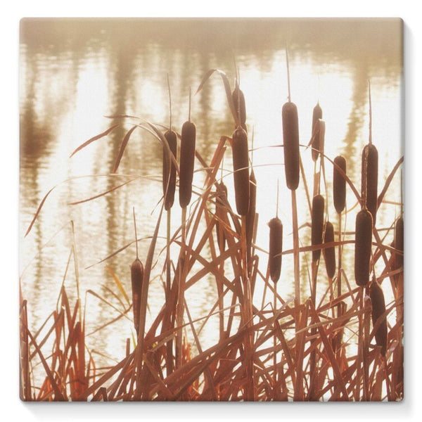 Dry Bushes Near The River Stretched Canvas 10X10 Wall Decor