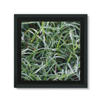 Early Morning Dew On Grass Framed Eco-Canvas 10X10 Wall Decor