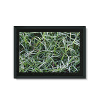 Early Morning Dew On Grass Framed Eco-Canvas 36X24 Wall Decor