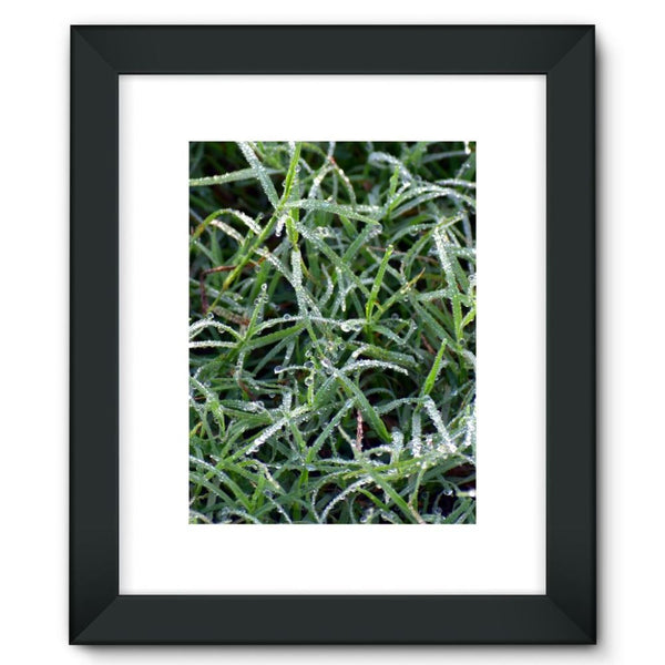 Early Morning Dew On Grass Framed Fine Art Print 12X16 / Black Wall Decor