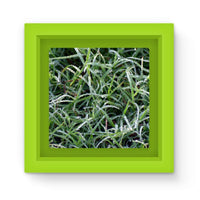 Early Morning Dew On Grass Magnet Frame Green Homeware