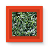 Early Morning Dew On Grass Magnet Frame Red Homeware