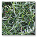 Early Morning Dew On Grass Stretched Canvas 10X10 Wall Decor
