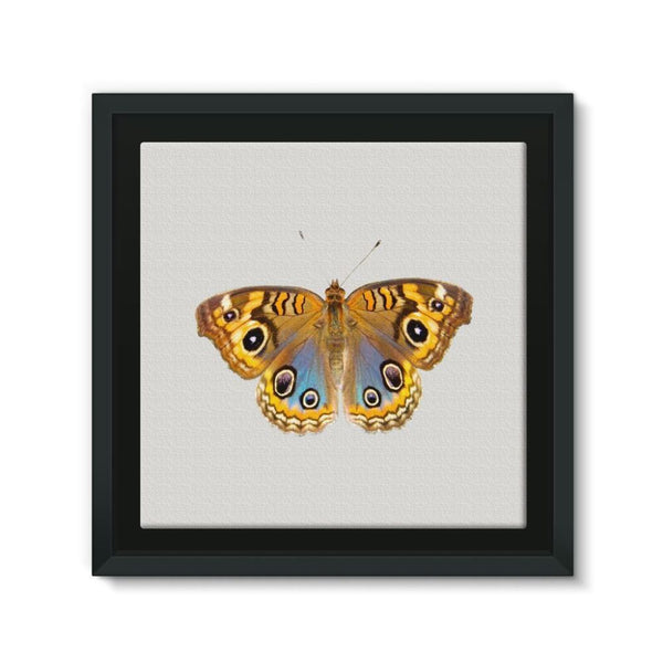 Eight Eyes Butterfly Framed Eco-Canvas 10X10 Wall Decor