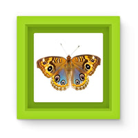 Eight Eyes Butterfly Magnet Frame Green Homeware