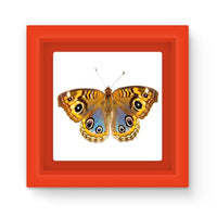 Eight Eyes Butterfly Magnet Frame Red Homeware