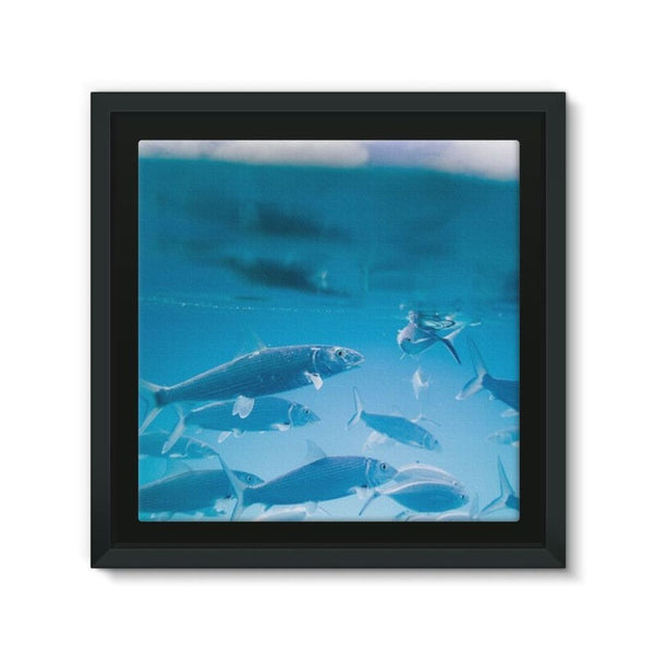 Fishes Under Water Framed Canvas 12X12 Wall Decor