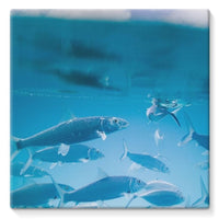 Fishes Under Water Stretched Eco-Canvas 10X10 Wall Decor