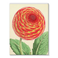 Floral Magazine 1869 Dahlia Stretched Canvas 12X16 Wall Decor