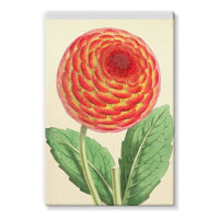 Floral Magazine 1869 Dahlia Stretched Canvas 24X36 Wall Decor