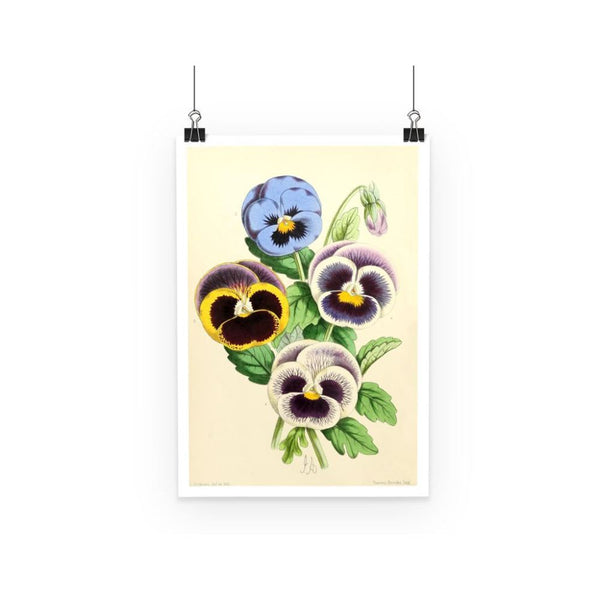 Floral Magazine 1869 Pansies Poster A3 Wall Decor