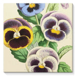 Floral Magazine 1869 Pansies Stretched Canvas 10X10 Wall Decor