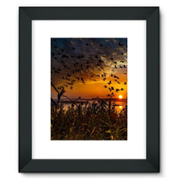 Flying Birds In The Sky Framed Fine Art Print 12X16 / Black Wall Decor