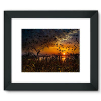 Flying Birds In The Sky Framed Fine Art Print 16X12 / Black Wall Decor