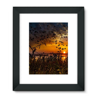 Flying Birds In The Sky Framed Fine Art Print 24X32 / Black Wall Decor