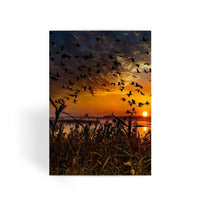 Flying Birds In The Sky Greeting Card 1 Prints