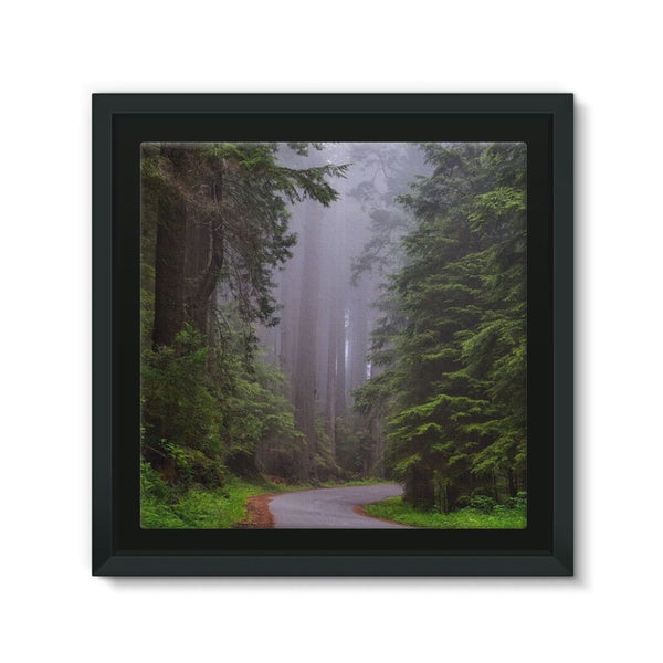 Foggy Redwood National Park Framed Canvas 12X12 Wall Decor