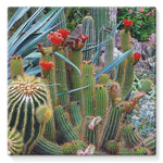 Fowering Cactus In A Garden Stretched Canvas 10X10 Wall Decor