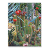Fowering Cactus In A Garden Stretched Canvas 18X24 Wall Decor
