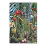 Fowering Cactus In A Garden Stretched Canvas 24X36 Wall Decor