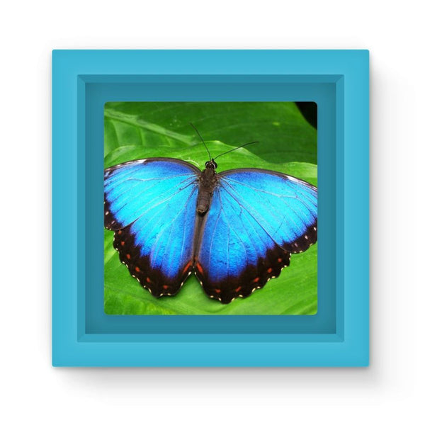 Garden Butterfly Magnet Frame Light Blue Homeware