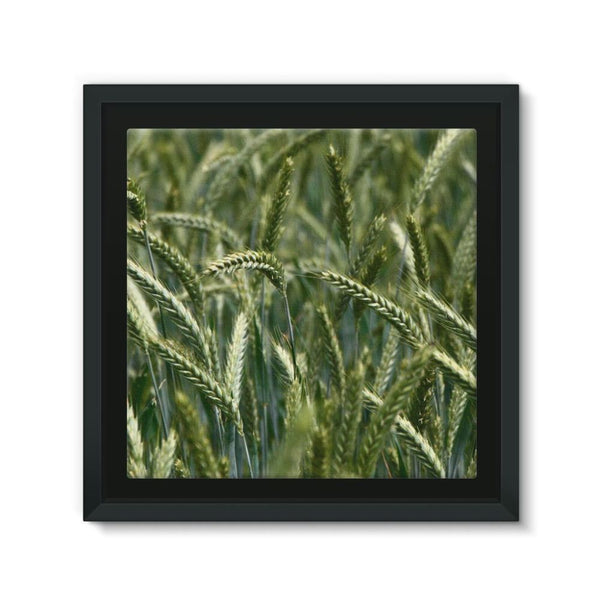 Grains Landscape View Framed Canvas 12X12 Wall Decor