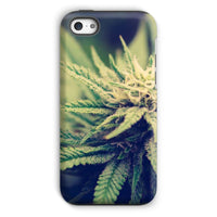 Green Cannabis Marijuana Phone Case Iphone 5C / Tough Gloss & Tablet Cases