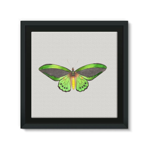 Green Grey Butterfly Framed Eco-Canvas 10X10 Wall Decor