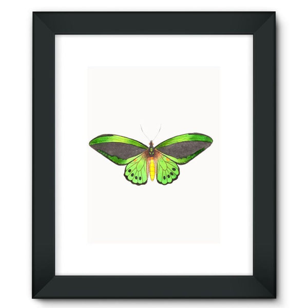 Green Grey Butterfly Framed Fine Art Print 12X16 / Black Wall Decor