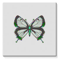 Green Rainbow Butterfly Stretched Canvas 10X10 Wall Decor
