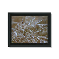 Ice Frozen On Plant Branches Framed Canvas 24X18 Wall Decor