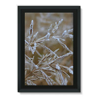 Ice Frozen On Plant Branches Framed Canvas 24X36 Wall Decor
