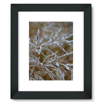 Ice Frozen On Plant Branches Framed Fine Art Print 12X16 / Black Wall Decor