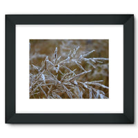 Ice Frozen On Plant Branches Framed Fine Art Print 16X12 / Black Wall Decor