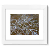 Ice Frozen On Plant Branches Framed Fine Art Print 16X12 / White Wall Decor