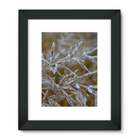 Ice Frozen On Plant Branches Framed Fine Art Print 18X24 / Black Wall Decor
