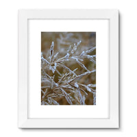 Ice Frozen On Plant Branches Framed Fine Art Print 18X24 / White Wall Decor