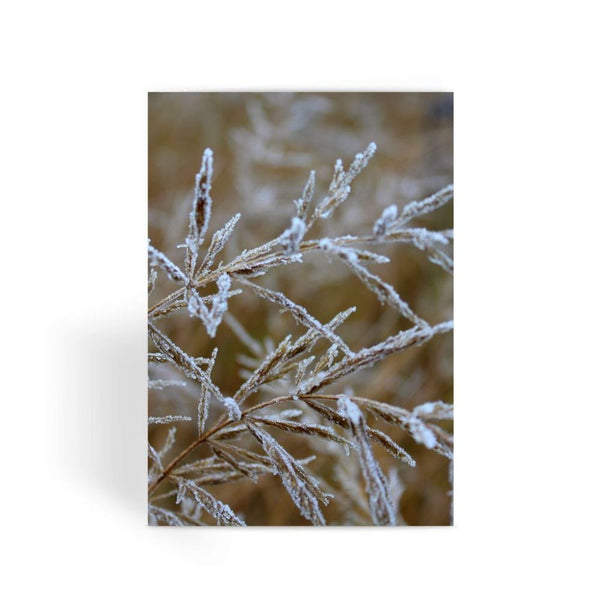 Ice Frozen On Plant Branches Greeting Card 1 Prints