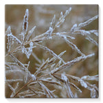 Ice Frozen On Plant Branches Stretched Canvas 10X10 Wall Decor