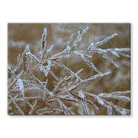 Ice Frozen On Plant Branches Stretched Canvas 16X12 Wall Decor