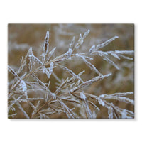 Ice Frozen On Plant Branches Stretched Canvas 24X18 Wall Decor